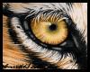[E]* Tiger Eye Bg