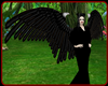 !    MALEFICENT  WINGS
