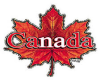 Canada maple