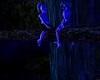 Moonlight Grotto!Unlock!