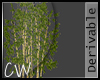 .CW.LostLake-Bamboo