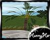 Tropical Pool Plant
