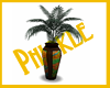 |P| NDS :: India Vase