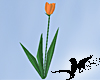 N-Sunrise Tulips