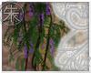 }T{  Wisteria plant