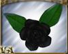 VA ~ Black Floor Roses