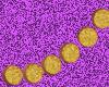 -MSD- Gold 6 Stud