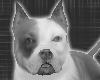 *-*Gray Dog Pet