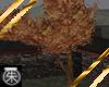 }T{ Autumn leaves Tree