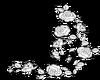 White Roses -BR