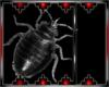 Drax bug 3