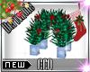 [CCQ]Derv:Christmas Deco