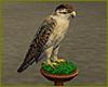 Falcon On Perch