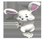 Bunny With Daisy
