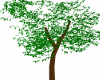 Tree Avi