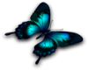 turquoise butterfly L