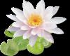 Flower (small)