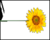 Sunflower wand