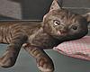 Old Grumpy Cat