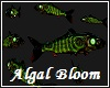 Algal Bloom Fish Swarm