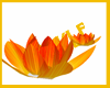 |P| NSD :: India Flowers