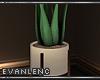 .SUITE PLANT.