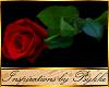 I~Red Rose