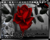 (D)Dark Rose
