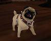 'Pug Dog Tan
