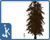 Dead Pine Tree (1)