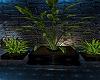 TRIO PLANTES