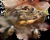 Native Owl {RH}
