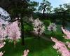 Cherry Blossom Lake