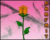 (*Par*) Orange Rose