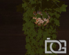 DG* Hanging Cabin