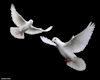 Heaven Doves Animated
