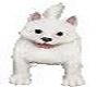 dog maltizer white