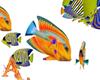 AngelFish Anim Dev