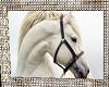 White Stallion Picture