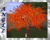 ~A~ Red Maple Tree