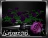 Purple Rose Roses