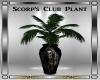 Scorp's Club Plant