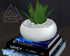 ◮ Books + Aloe Plant