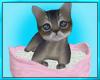 Bed Breakfast Kitten