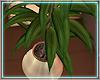 ○ Sunkissed Plant III