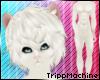Albino Ferret Fur M