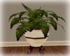 [Luv] 5B - Plant 2