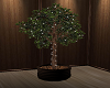 Ficus Tree w/lights