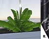 e Plant 2