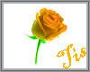 (Tis) Falling Roses P
